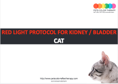 Cat red light protocol kidney bladder