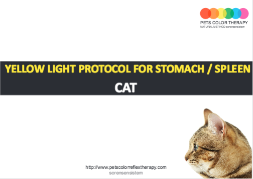 Cat yellow light protocol stomach spleen