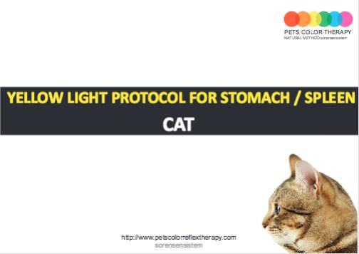 Cat yellow light protocol stomach spleen