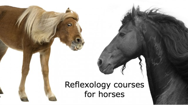 Horse massage course