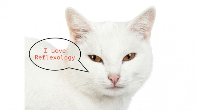 Reflexology for cats and other effective methods of healing