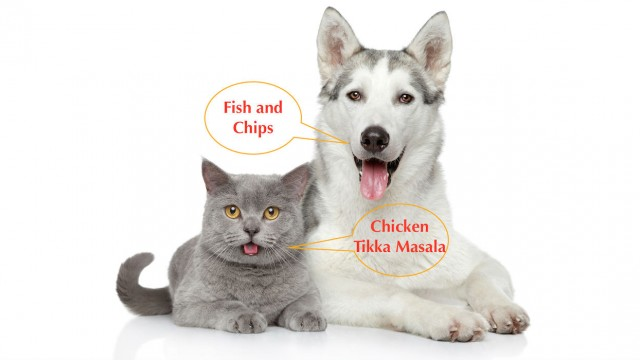 How to choose dog and cat food