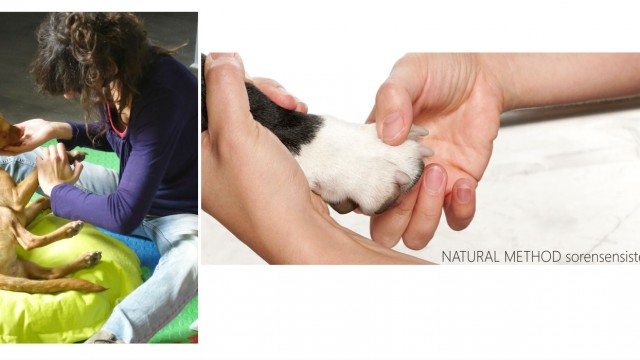 Reflexology for dogs and other alternative treatments