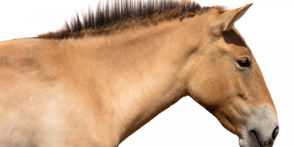 Horse thrush treatment