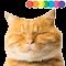 cat 60x60
