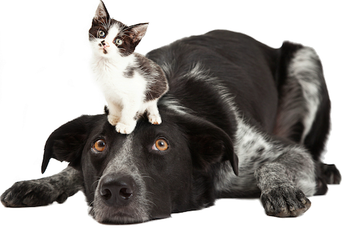 Cats And Dogs Differences