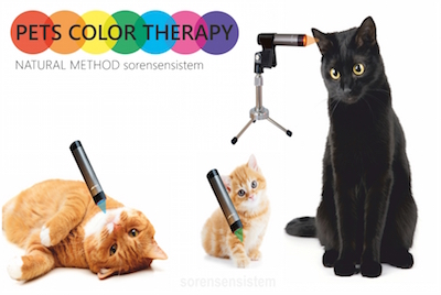 cat banner 900x601 1 smaller