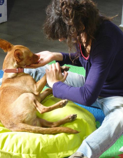 reflexology for dogs