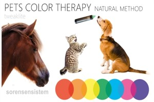 color therapy for pets