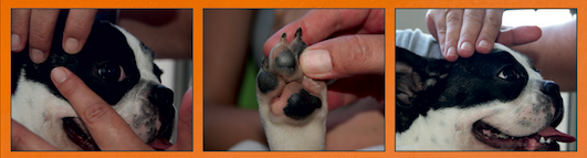 reflexology for dogs