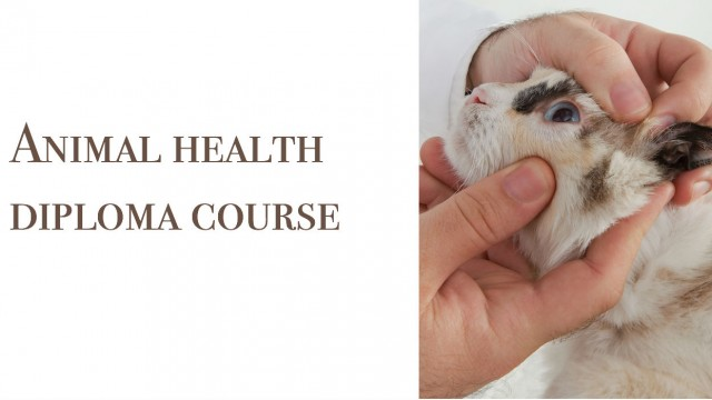 Animal health diploma course