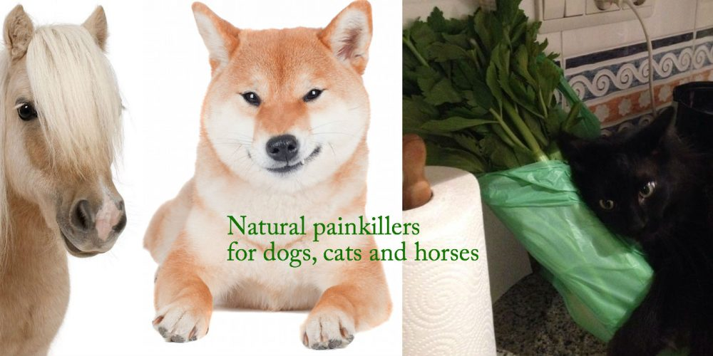 Natural painkillers for dogs, cats and horses