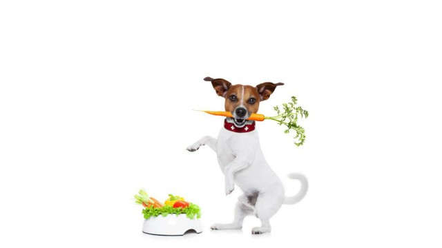 Organic pet food